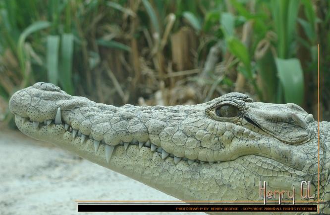 Croc' Docked !!!
