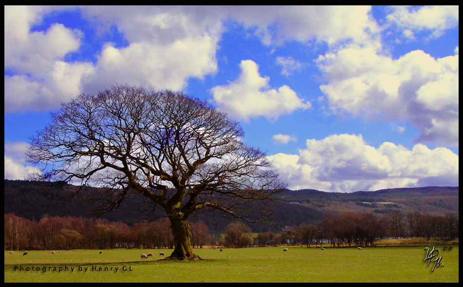 HGL-One-Tree