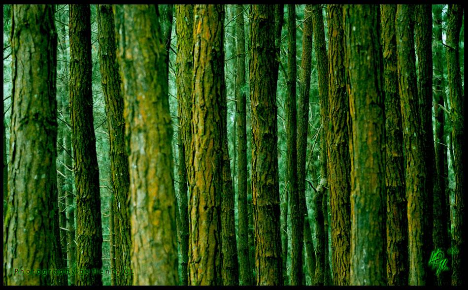 HGL-Woods