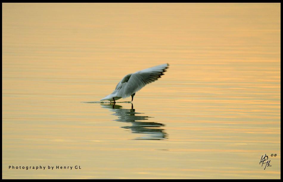 HGL-Bird-Surfing