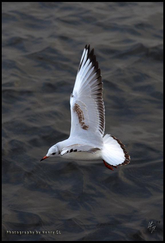 HGL-Bird-Flight-vertical