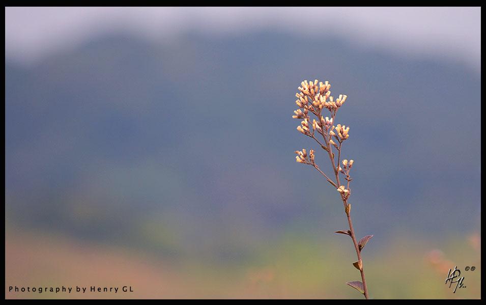 HGL-Wild-Flower-2