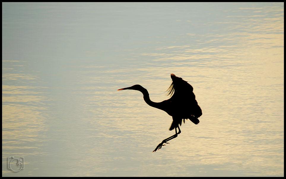255-HGL-Bird-crane-sillhute