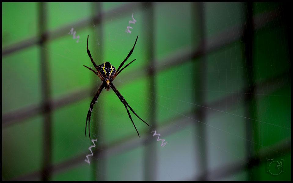 HGL-Spider-Web