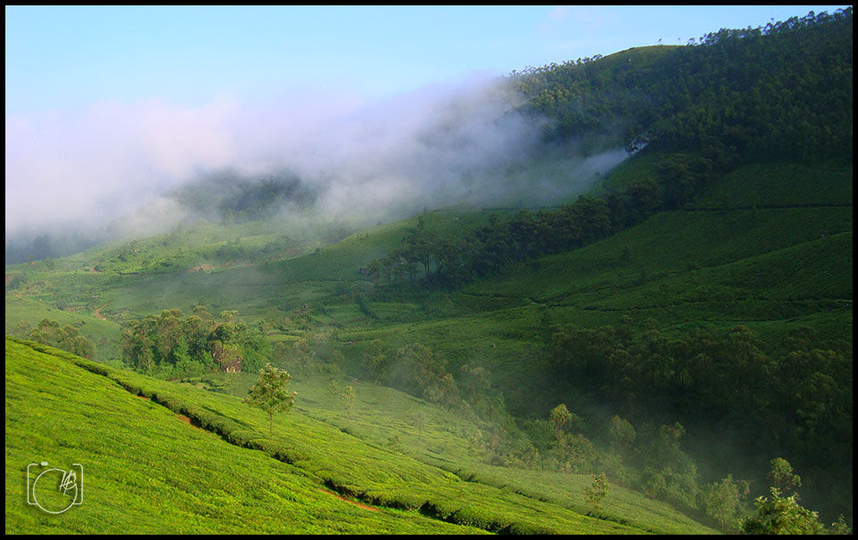 HGL-Munnar-Tea-Estates