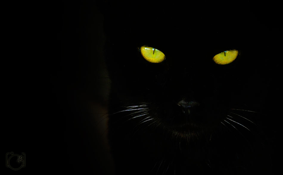 HGL-Cat-eye2a