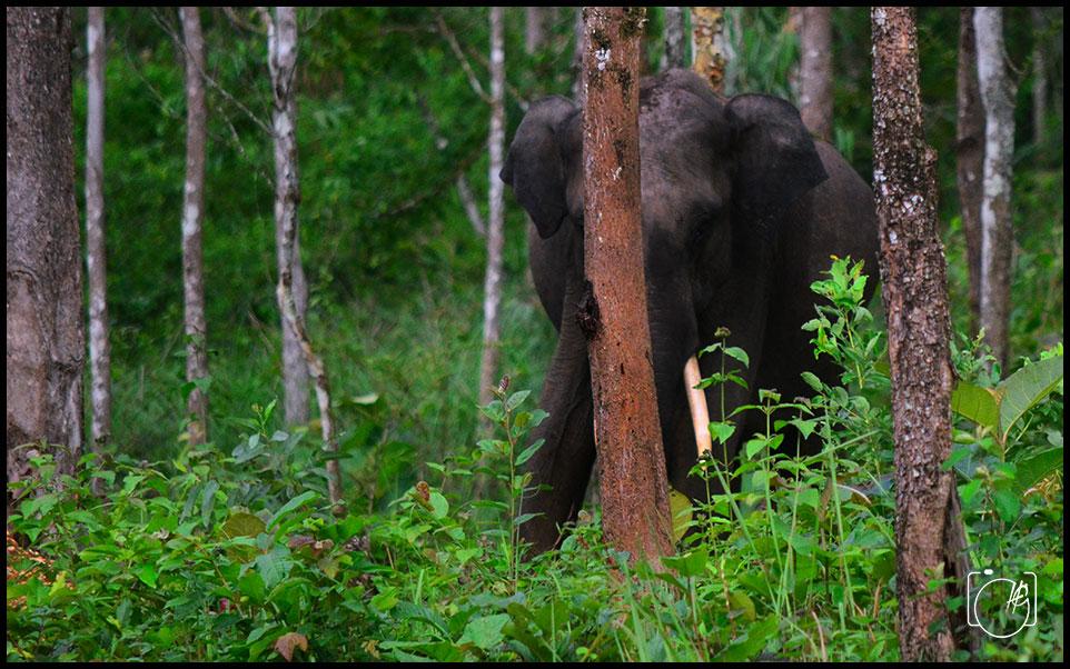 HGL-Elephant-Attack