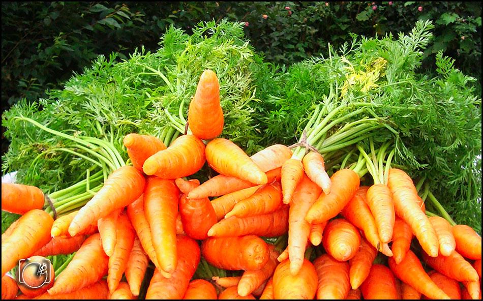 HGL-Carrots