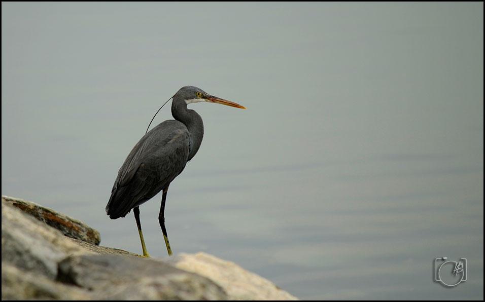 HGL-Bird-Crane