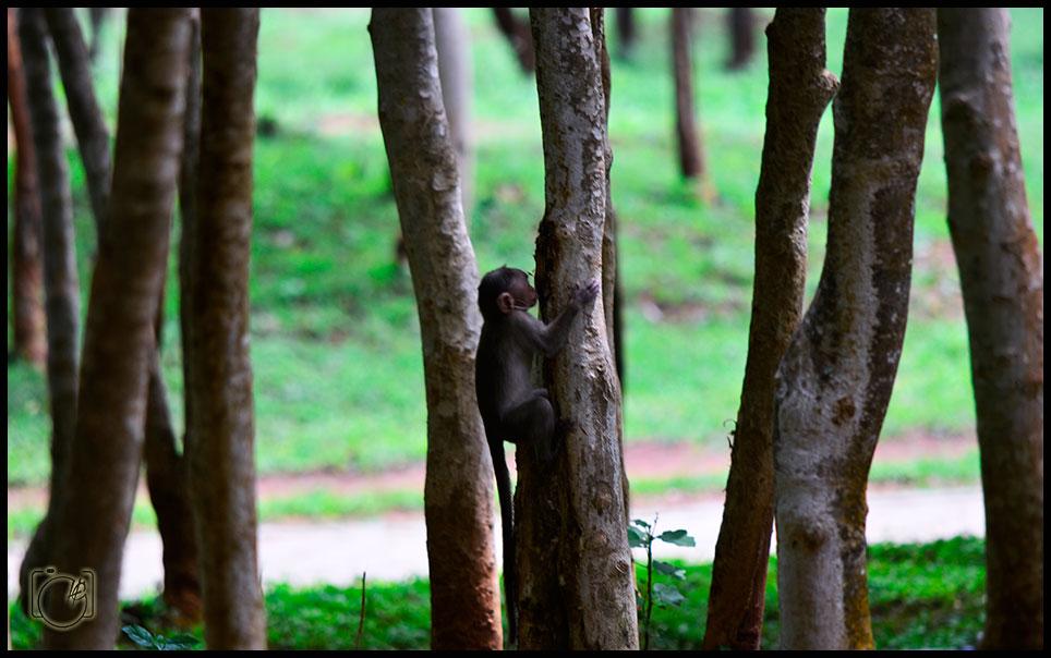 HGL-Monkey-climb