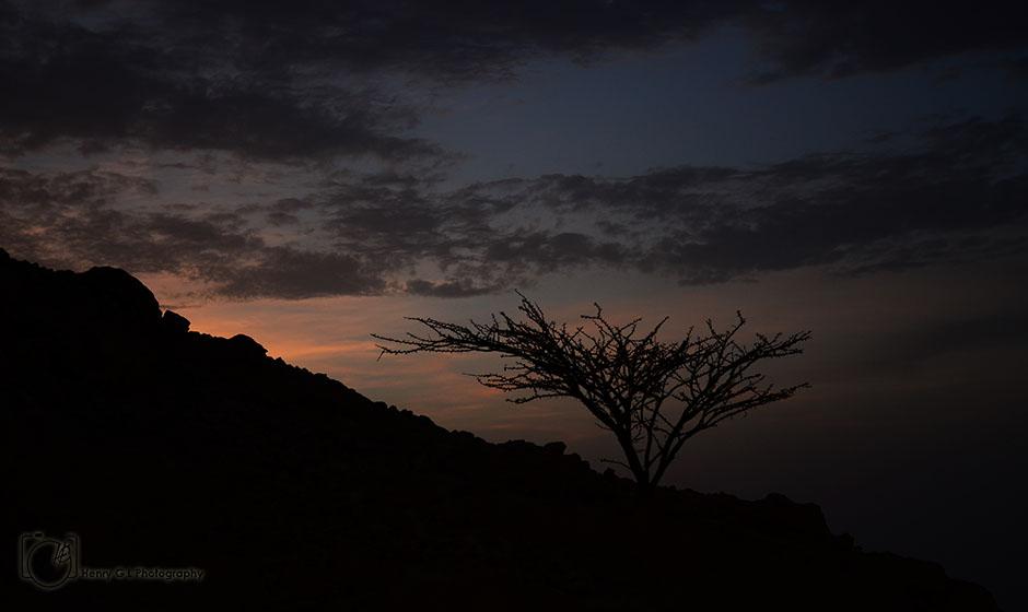 HGL Desert Tree
