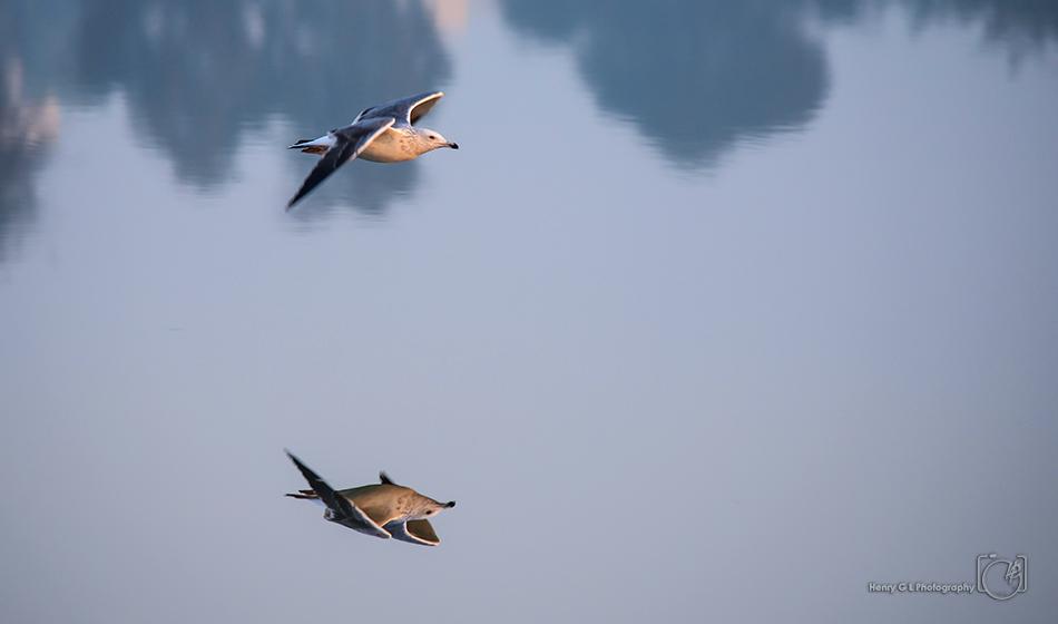 HGL Bird Flight reflection