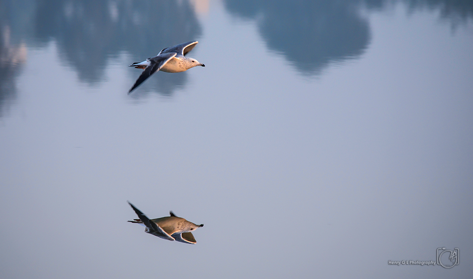 HGL Bird Flight reflection