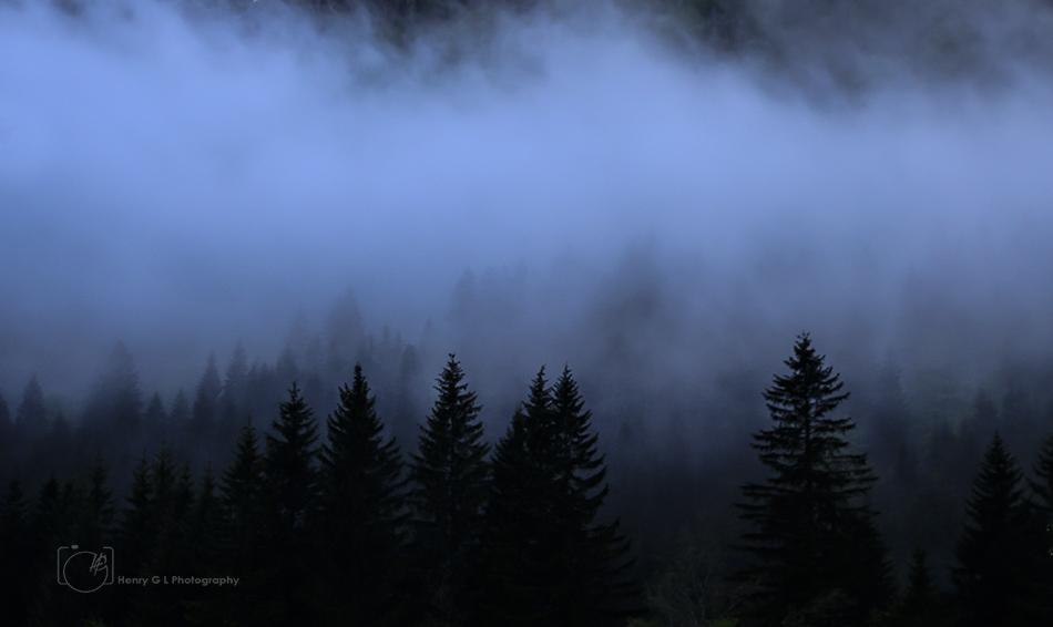 HGL Misty Woods