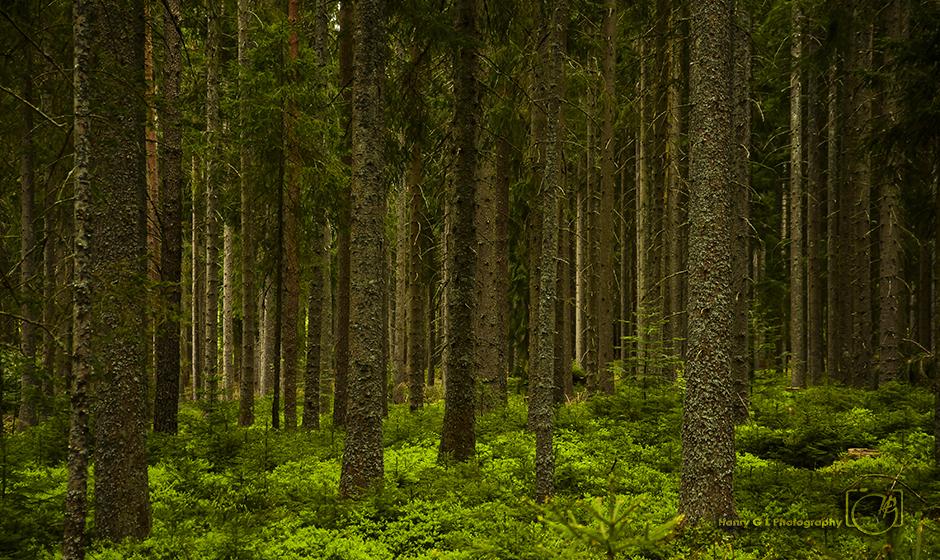 HGL Black Forest