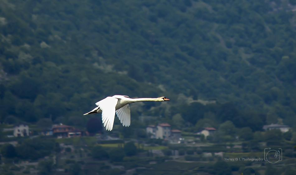 HGL Goose Flight