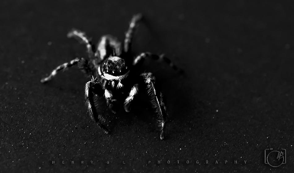 HGL Spider Hunt mode